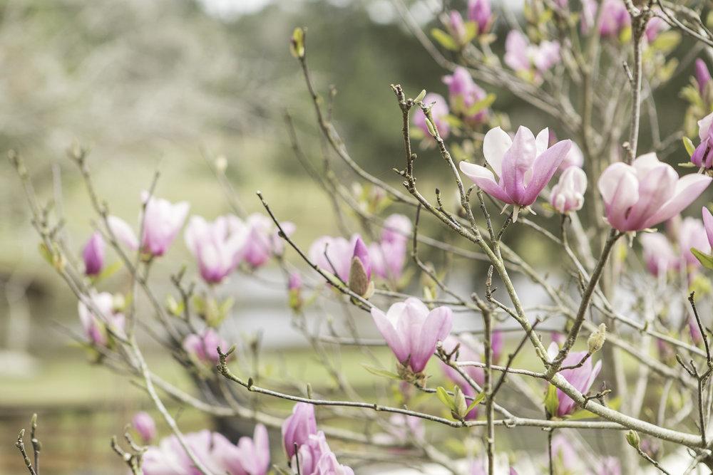 flowers (4 of 4).jpg