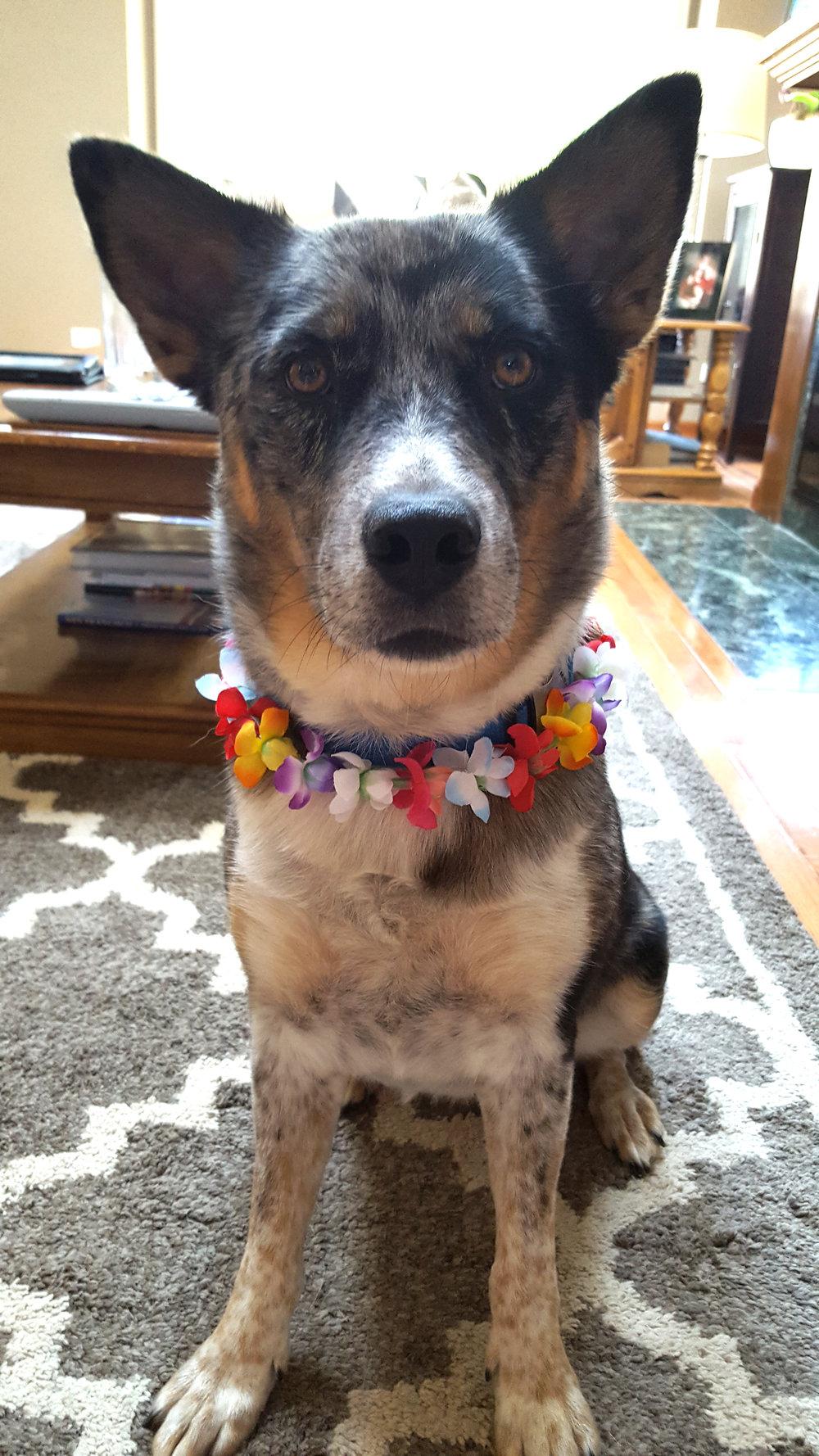 Meet Penny Roo!