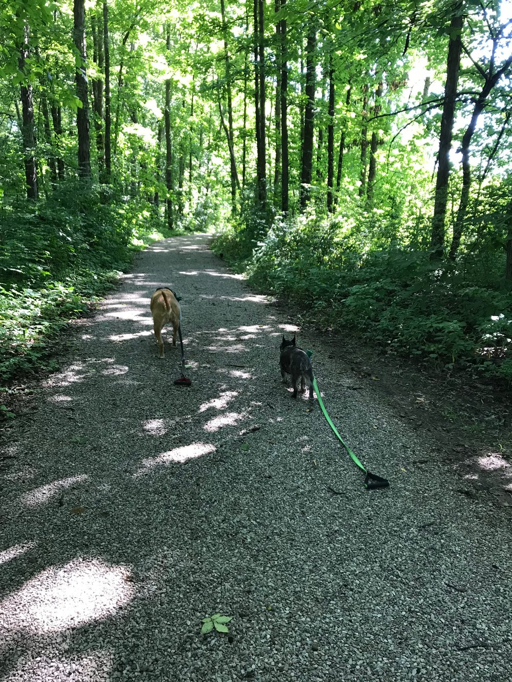 Our dogs, Callie and Koda, exploring the hiking trail near our home