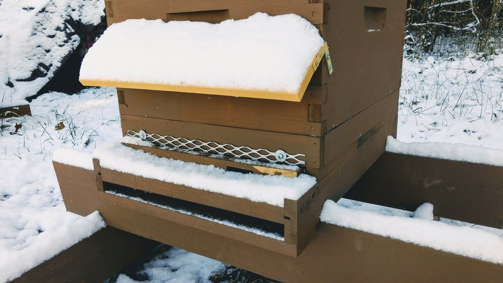 Hive with a snow visor