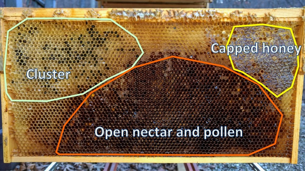 Winter starvation: the bees on the left were head-in to the cells, desperately looking for food