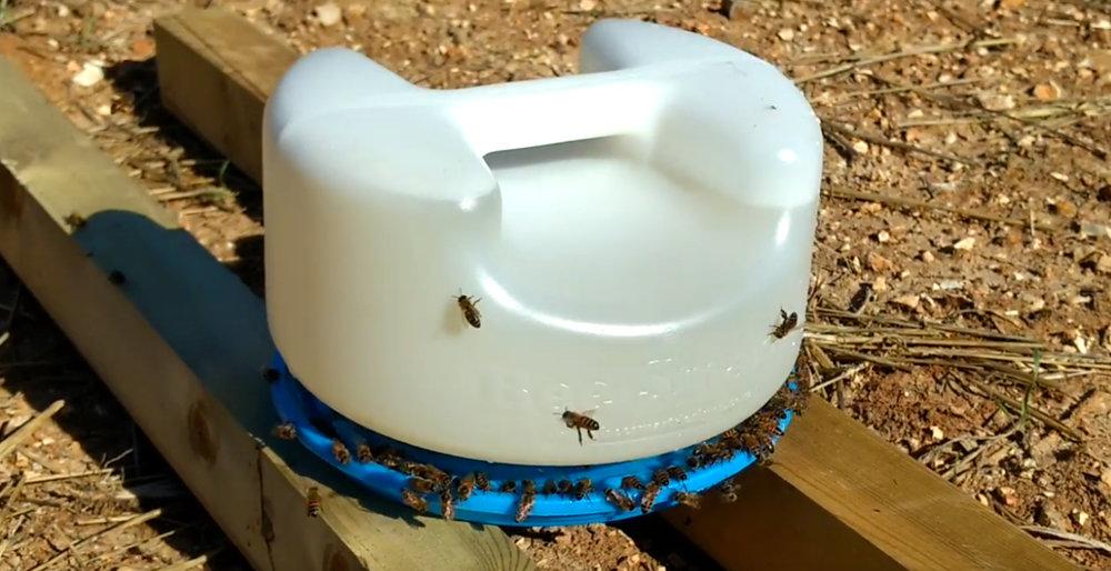 180302_Bee_Smart_feeder.jpg