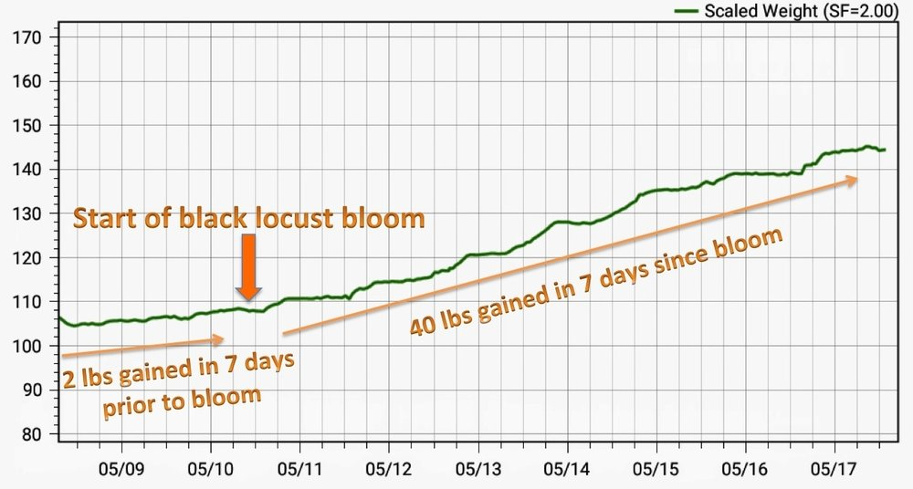 Hive weight before and after black locust trees began blooming; data collected from a Broodminder scale