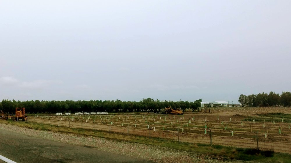White bee hives sitting between newly planted and mature almond trees
