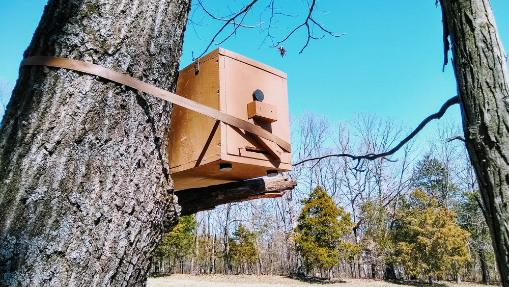 Another swarm trap waiting for house guests