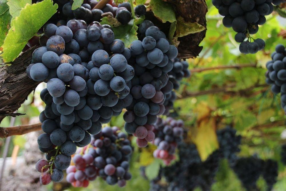 Red Wine-min.jpg