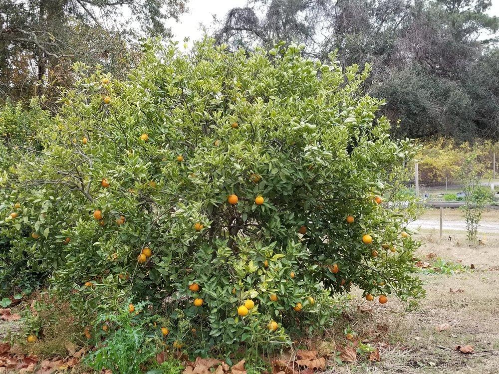 A small citrus.