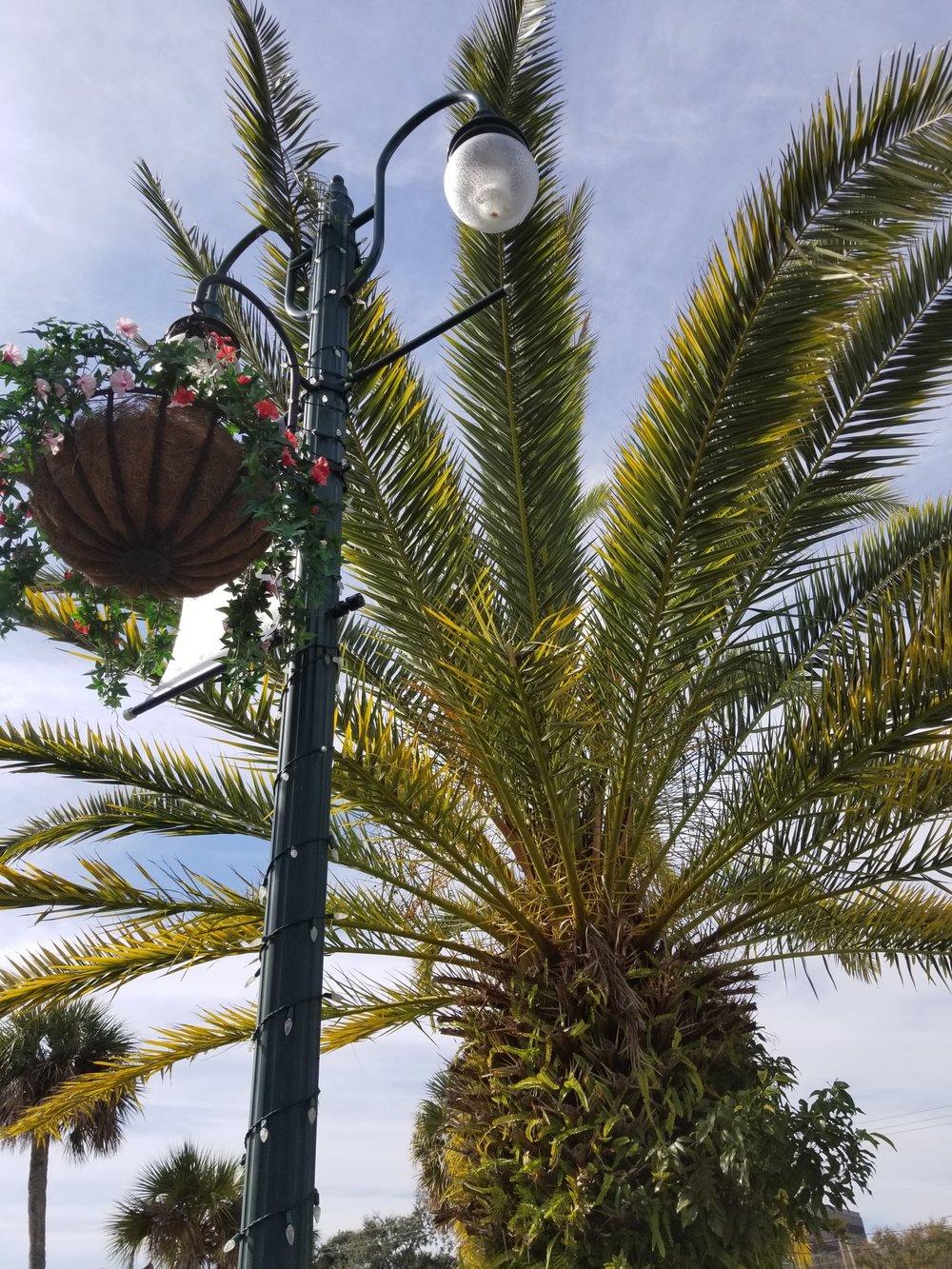 A lush palm along the sidewalk.