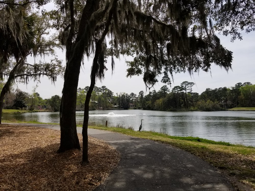 I liked the heron at the water's edge, so the alligator to my right is missing from the photo.