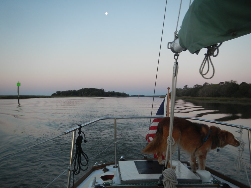 With the moon still high in the sky, Grace motors north. Murphy is keeping careful watch for dolphins.