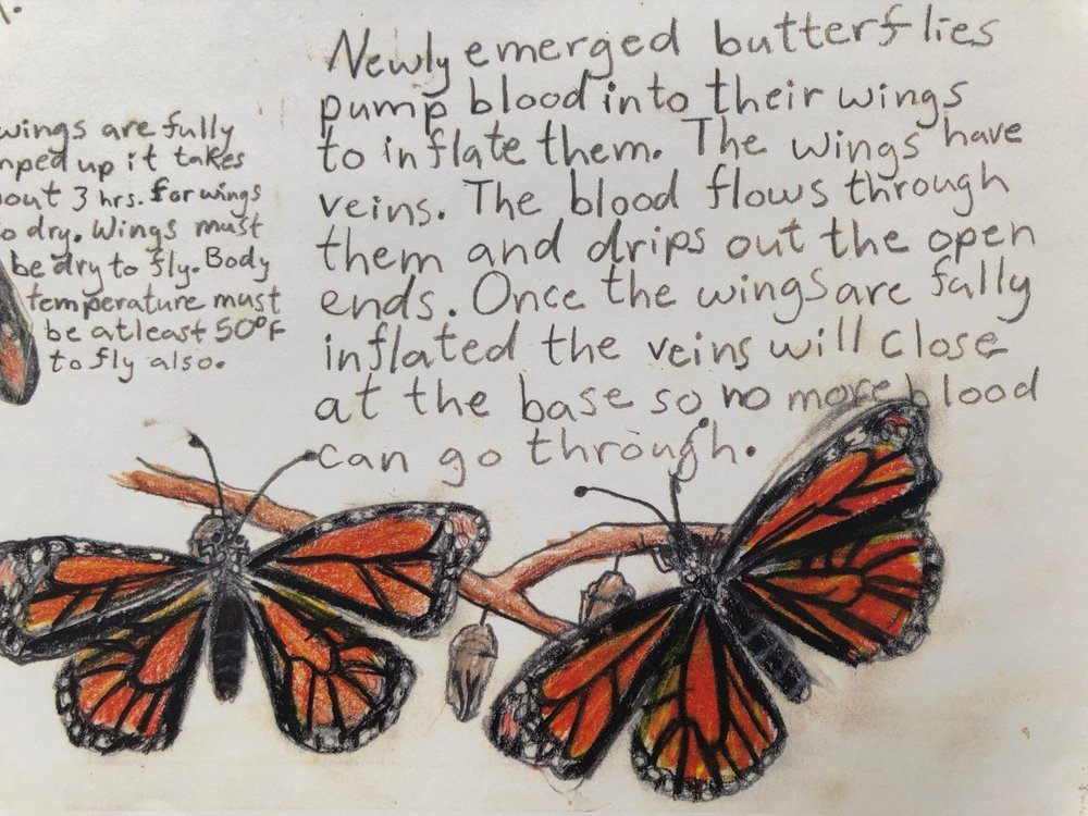 Following the life cycle of the monarch
