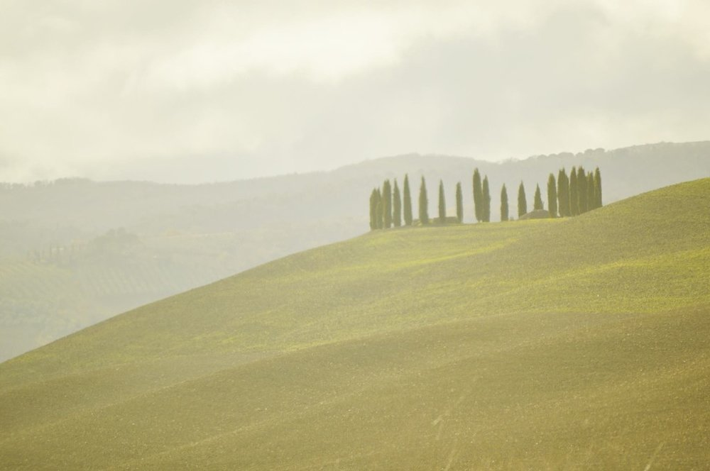Hillside-Tuscany-Vinley-Entire-1024x680.jpg