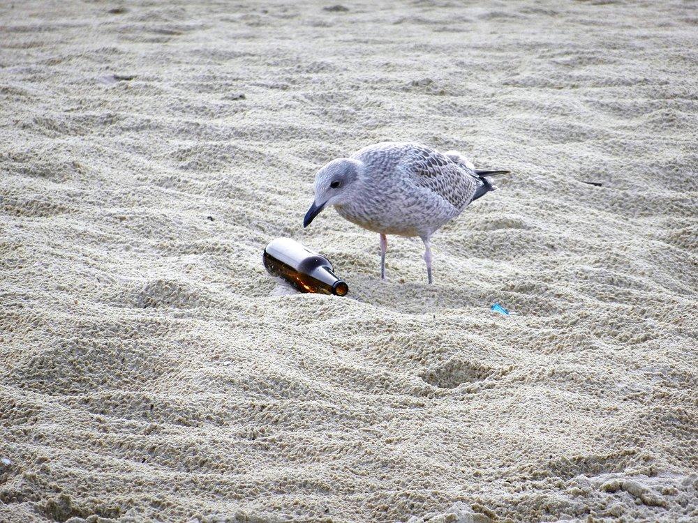 seagull-1943079_1280.jpg