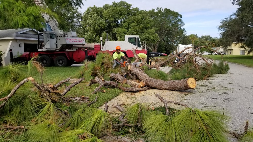 Professional tree removal for Hudson, Pinellas, Pasco, Hillsborough
