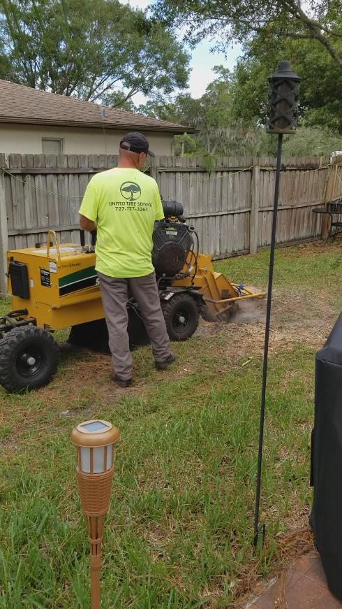 Full stump grinding services for Hudson, Pinellas, Pasco, Hillsborough