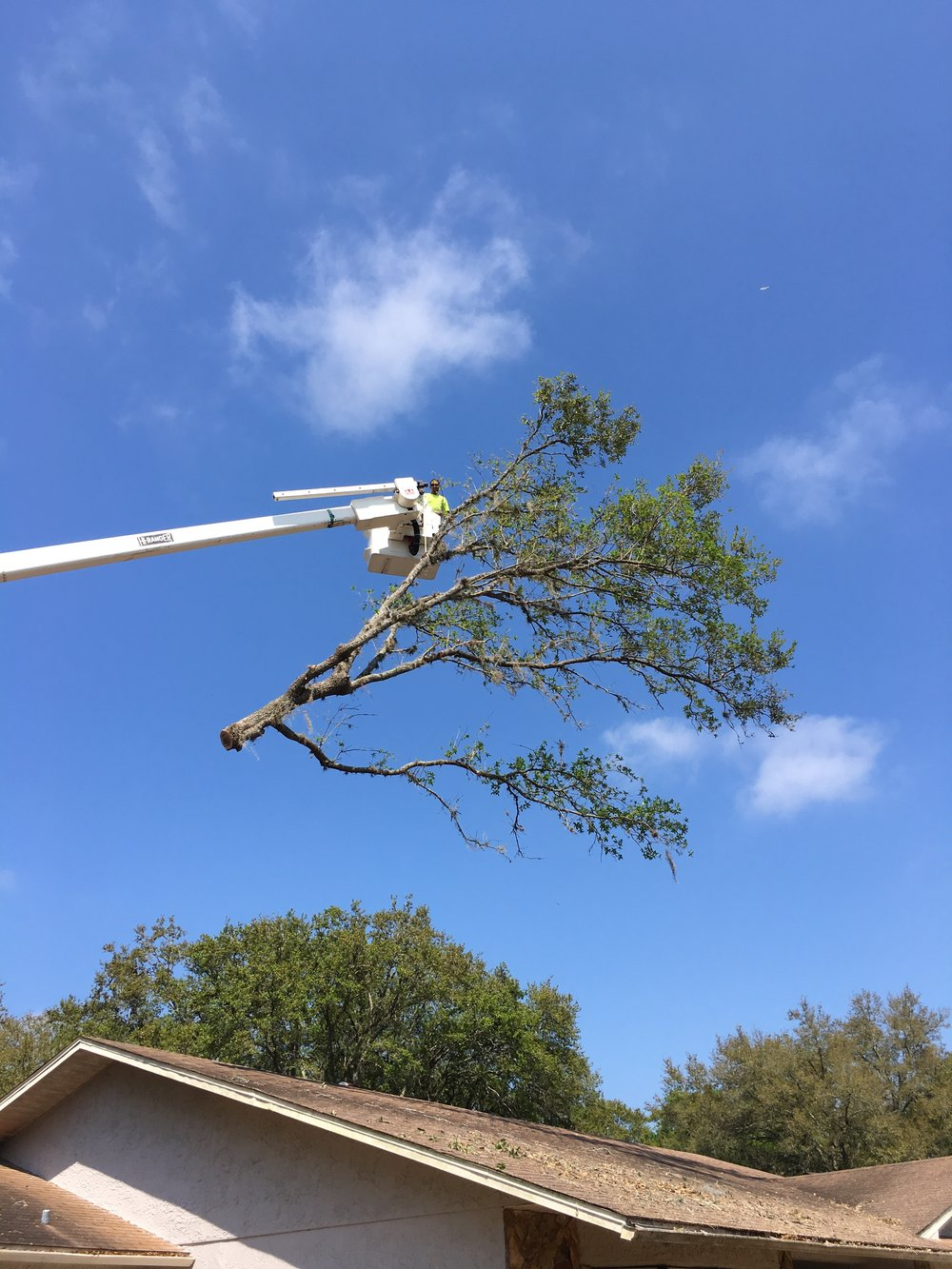 Some trees and rot leaving your home vulnerable to tree damage. Let us take a look and provide you with a free no-obligation estimate.