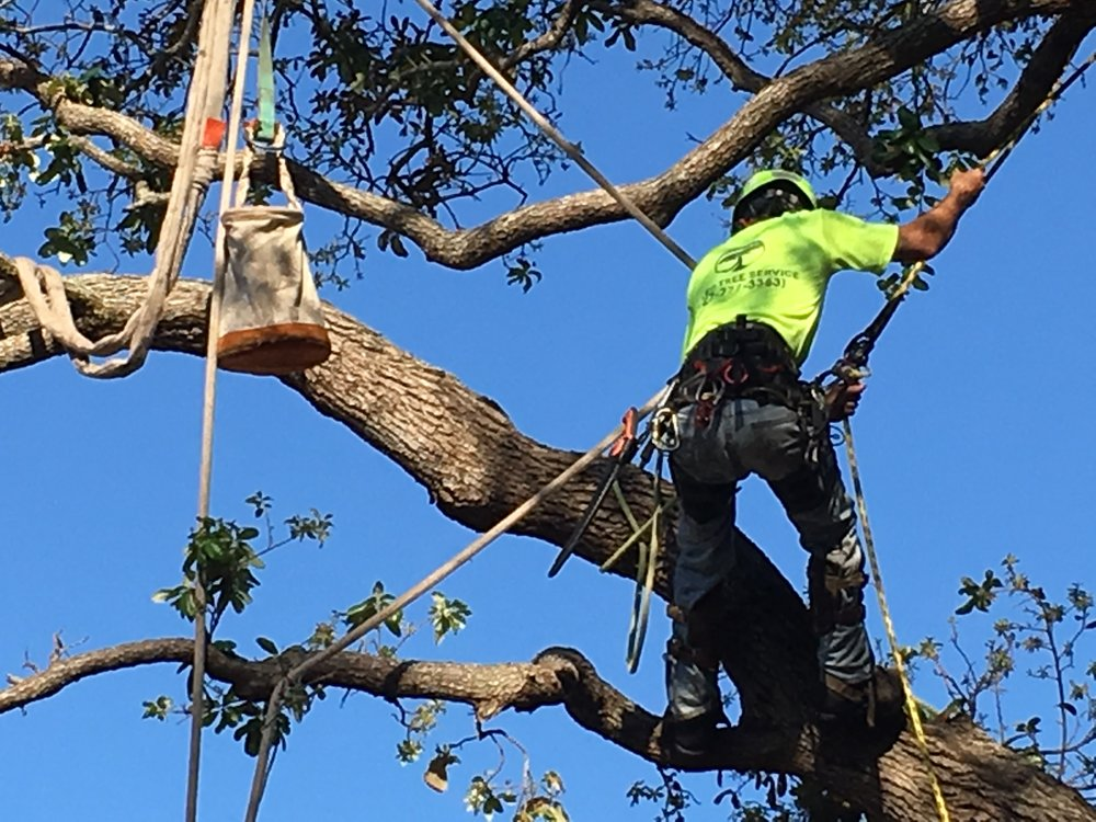 Trained professionals for all of your tree pruning and tree removal services.