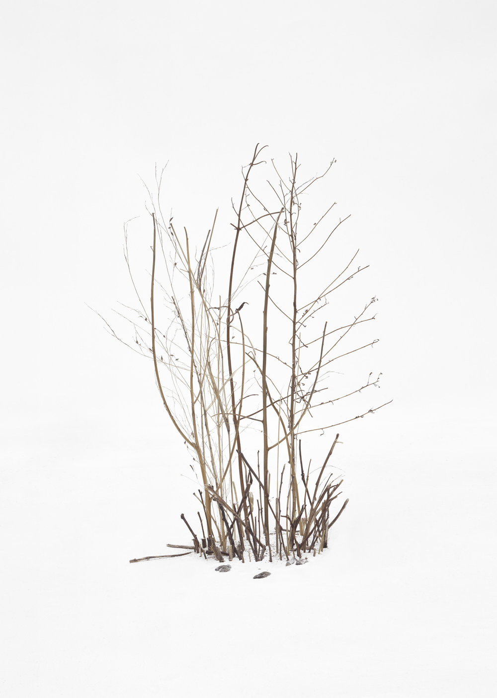 Untitled_1_(treesbushessnow)2014.jpg