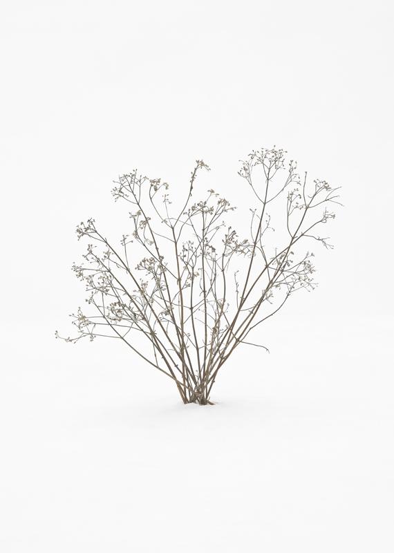 Untitled_5-aka-treesbushessnow.jpg