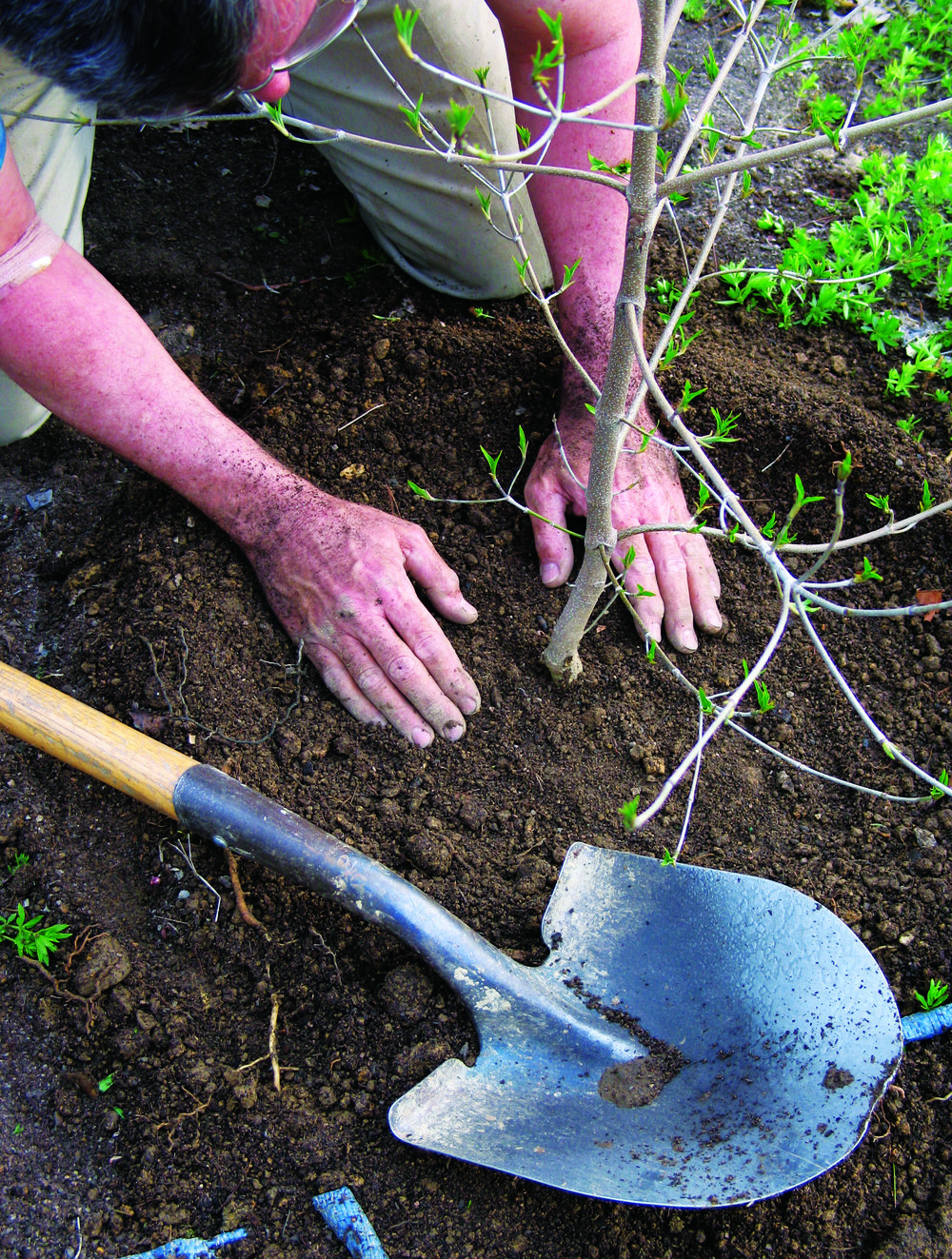 Reclamation tree planting.jpg