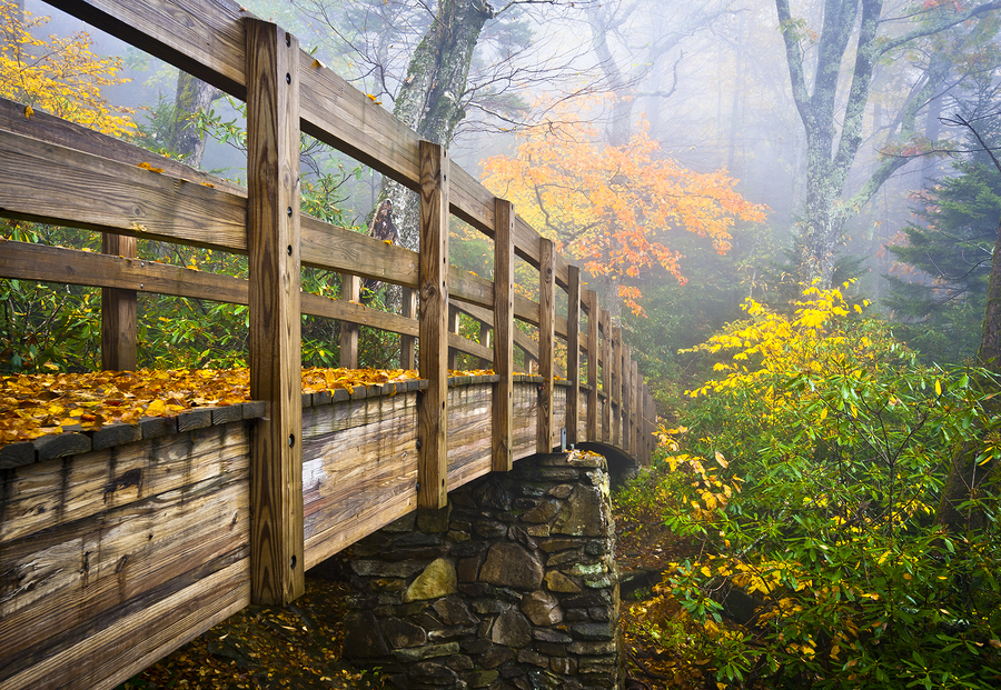 Autumn Appalachian Hiking Trail Foggy Nature Blue Ridge Fall Foliage