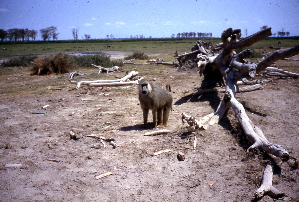 Kenya sights (19)