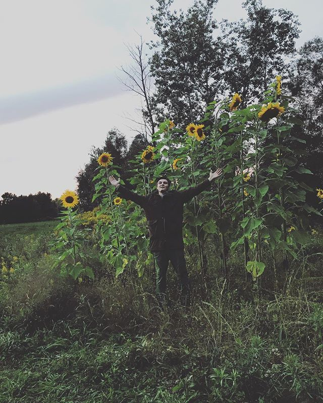 Who knew sunflowers were actually trees¿ 📸 - @rajalu