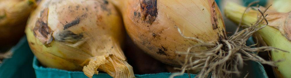 local-onions-1200x324.jpg