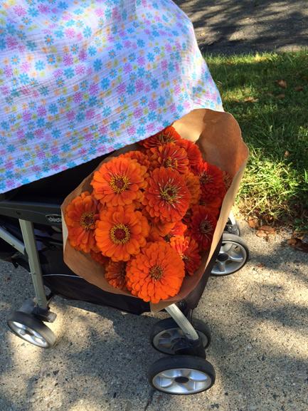 local orange zinnias for ann arbor wedding