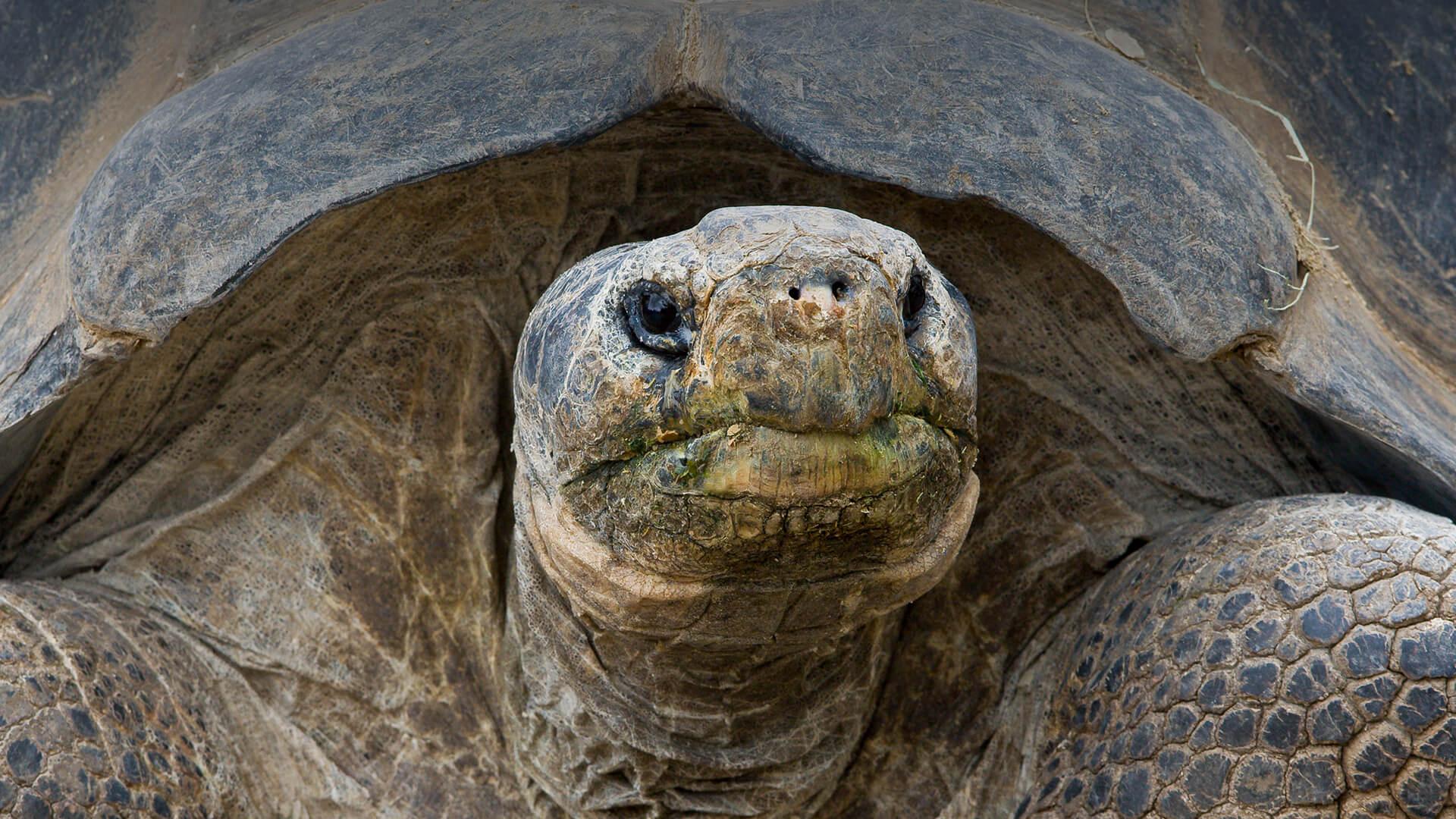San Diego Turtle Tortoise Society