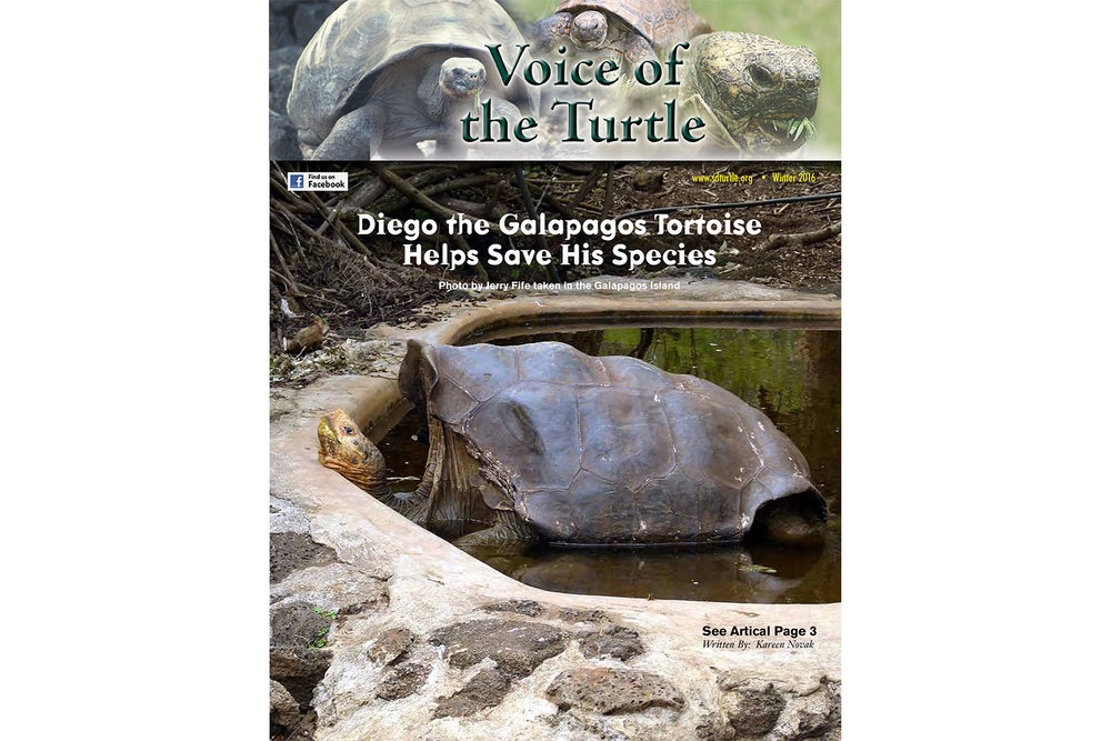 voice of the turtle - You can receive this colorful and informative, quarterly publication by mail if you are a Society member. A free digital copy is also available for download.