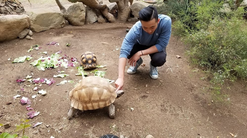 Dr. James Liu, Our host and tour guide with a Ploughshare Tortoise
