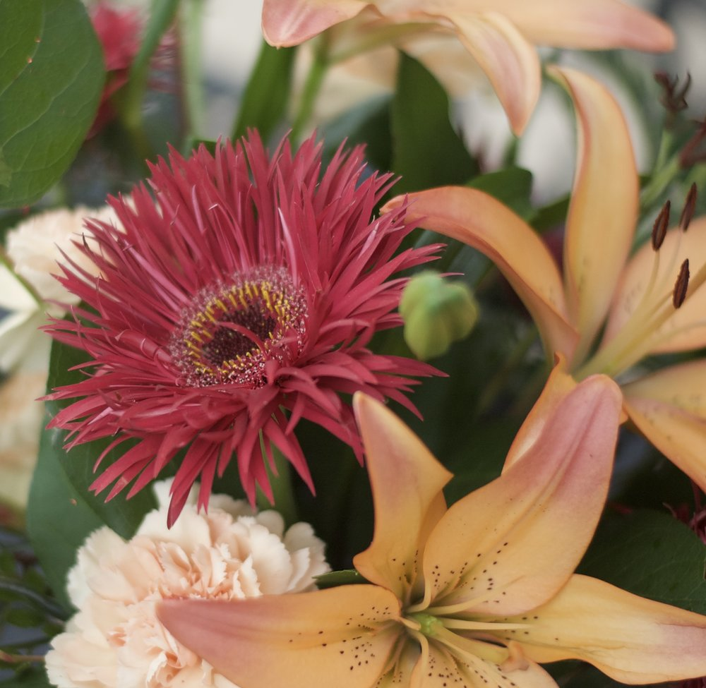 "Burgundy spider gerbera daisy and peach standard carnations act as the ""supporting cast"" filler flowers"