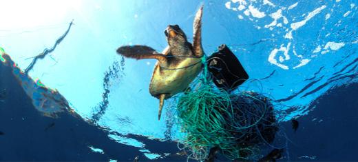 © Ocean Conservancy