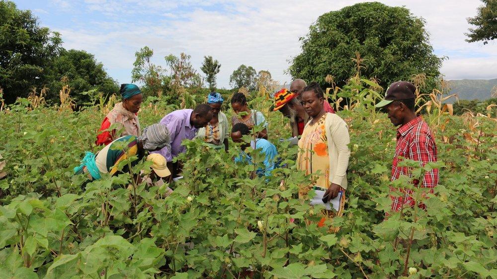Training cotton farmers to grow organic at Farmer Field School in Ethiopia.