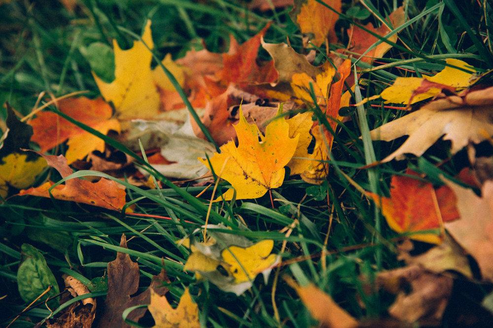 WW_AutumnalSmokies00