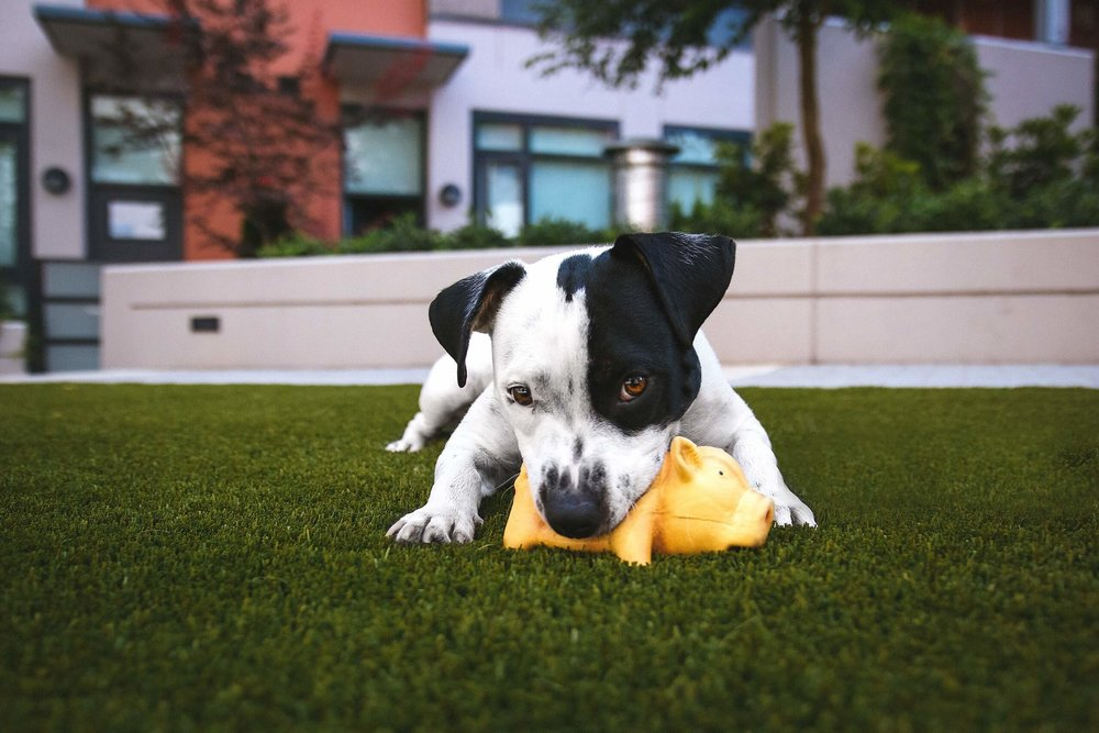 Using toys as a reward in dog training.