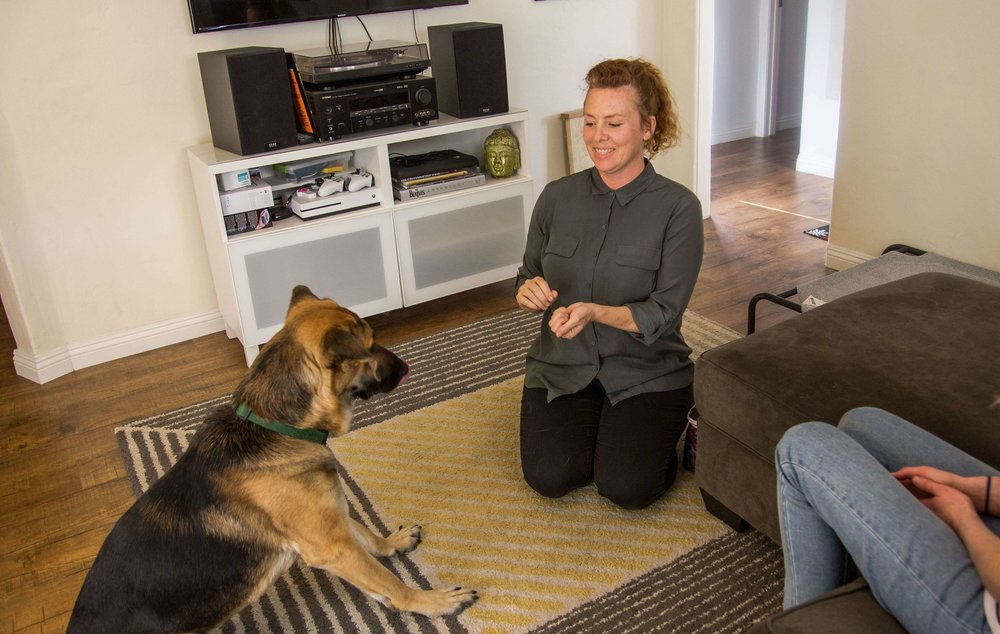 Dog trainer Alexandra Bassett is a positive reinforcement dog trainer and the owner of Dog Savvy Los Angeles.