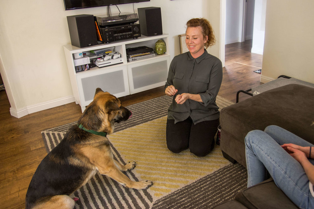 German Shepherd getting private dog training session with a dog trainer in Los Angeles.