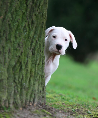 Hide and seek - dog training games