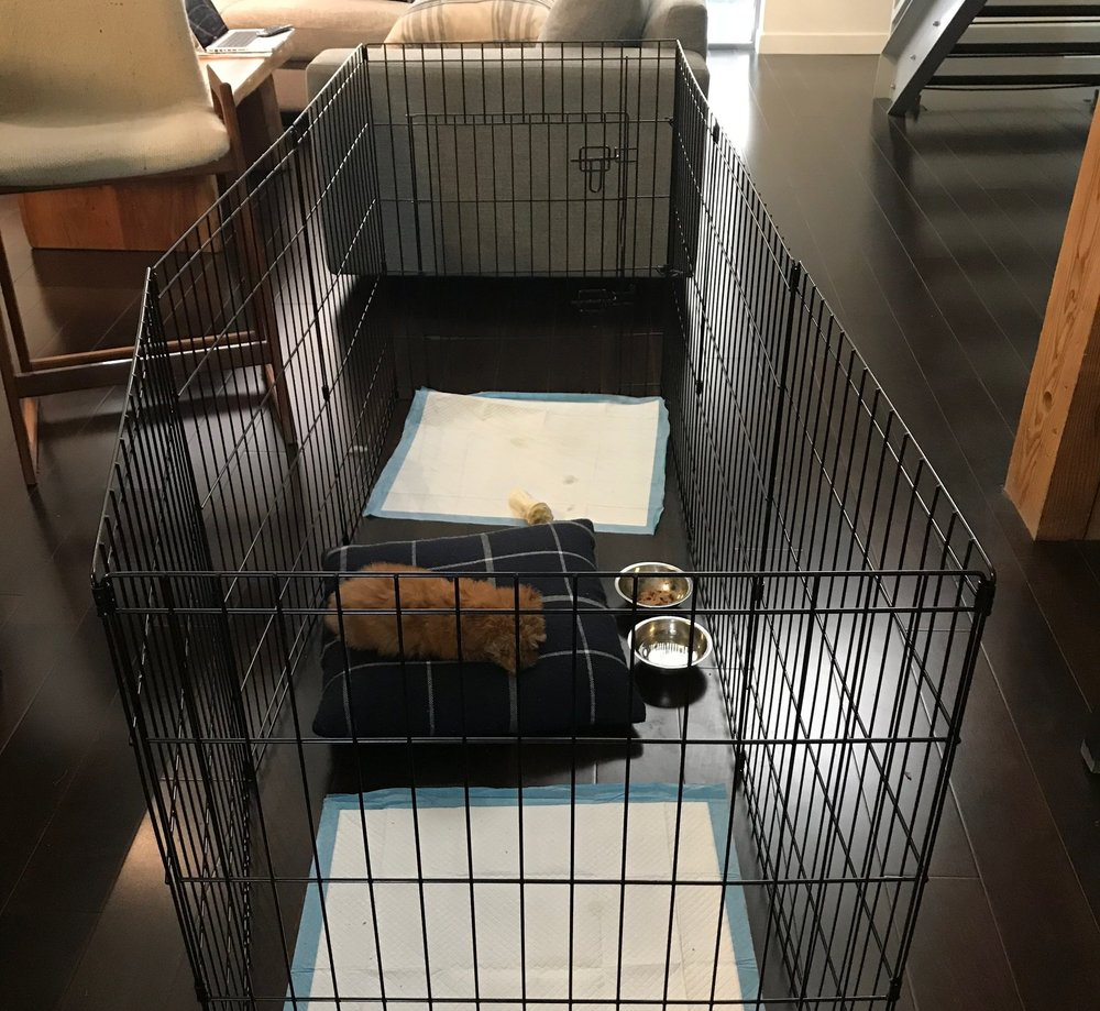Puppy training 101: Use a long-term confinement area while potty training a puppy.