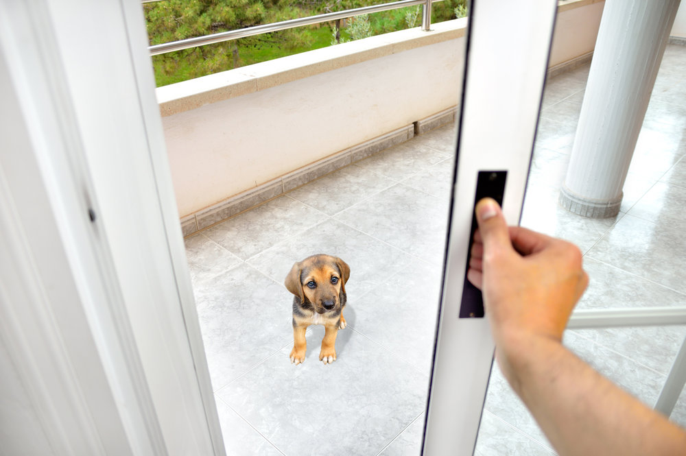 Dog separation anxiety can be provoked by putting a dog or puppy in isolation too frequently.