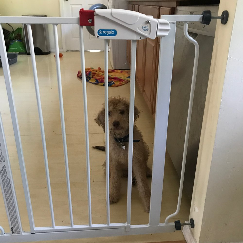 Doggie decompression requires using a gate, tether, or using an exercise pen to erect a barrier to help teach a dog or puppy to spend time by themselves.