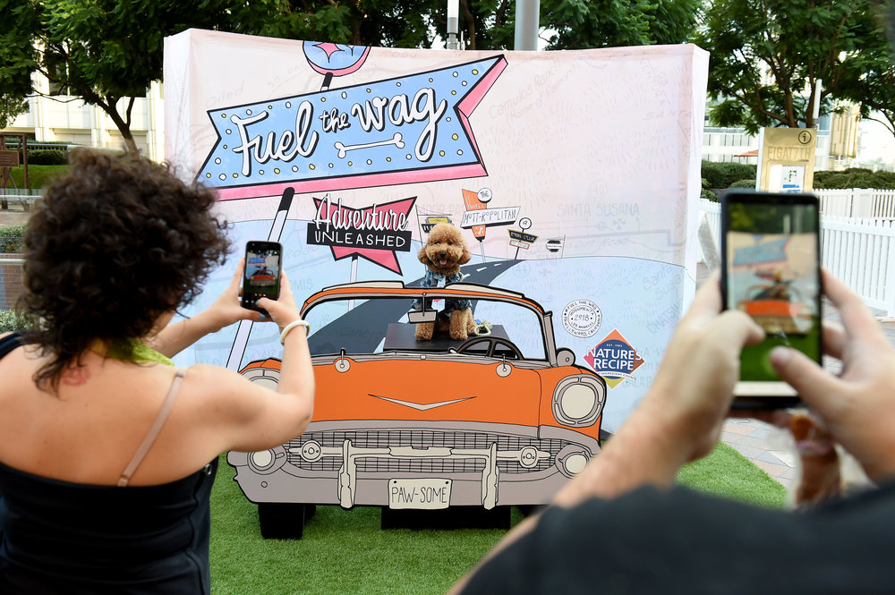 The Los Angeles Positive Dog Trainer Alliance will be providing an on-site staff of professional dog trainers to assist the event organizers at dOGUMENTA Los Angeles. Photo Credit: Jordan Strauss/AP Images for Nature's Recipe