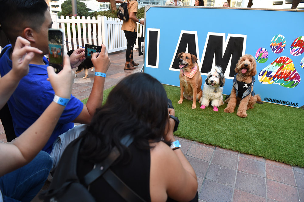 dOGUMENTA LA offers the public a fun way to spend time with their dogs. Photo credit: Jordan Strauss/AP Images for Nature's Recipe