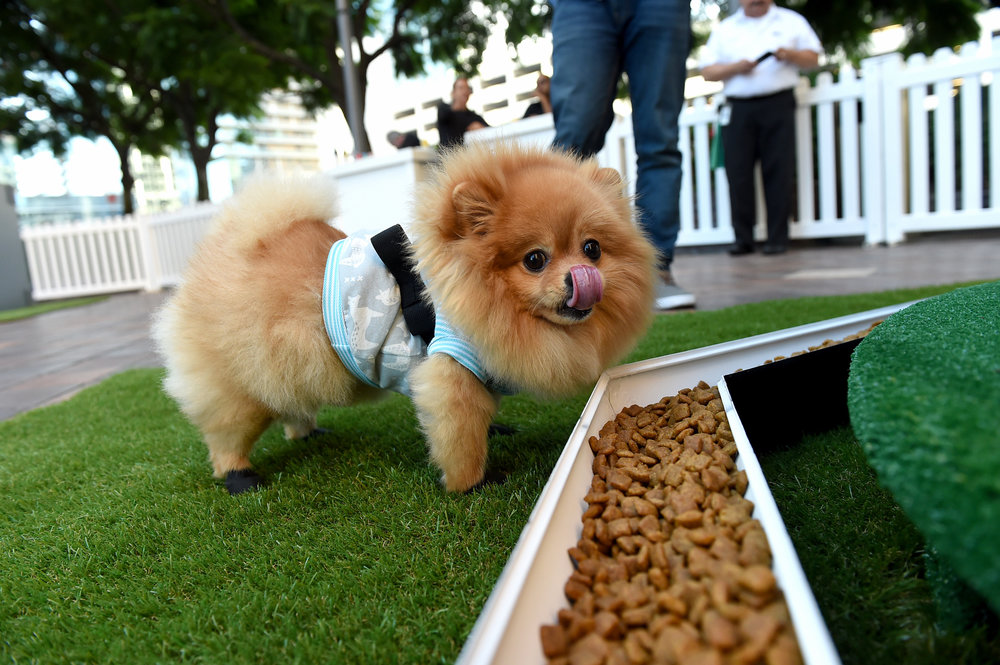 dOGUMENTA LA encourages exploration by including edible and olfactory elements for the dogs attending to enjoy. Photo credit: Jordan Strauss/AP Images for Nature's Recipe