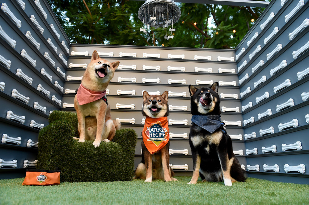 Culture hounds of all kinds flocked to the VIP Preview of dOGUMENTA LA. Photo credit: Jordan Strauss/AP Images for Nature's Recipe