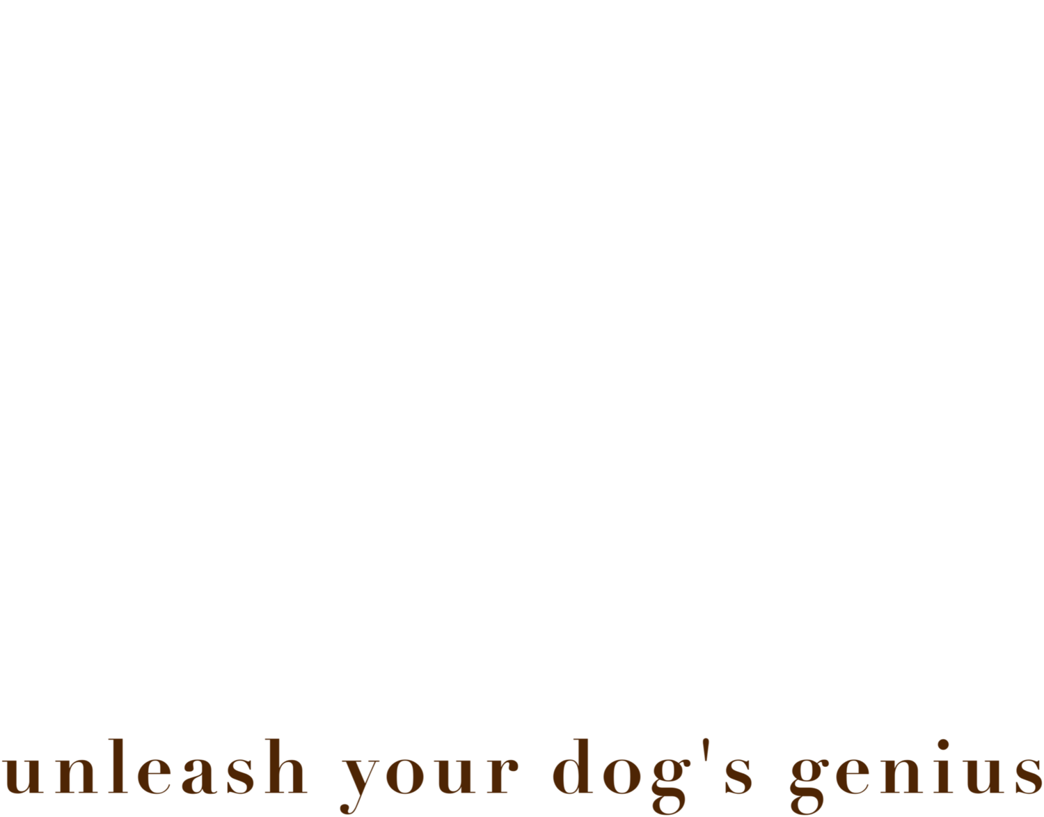 Dog Training | Dog Savvy Los Angeles