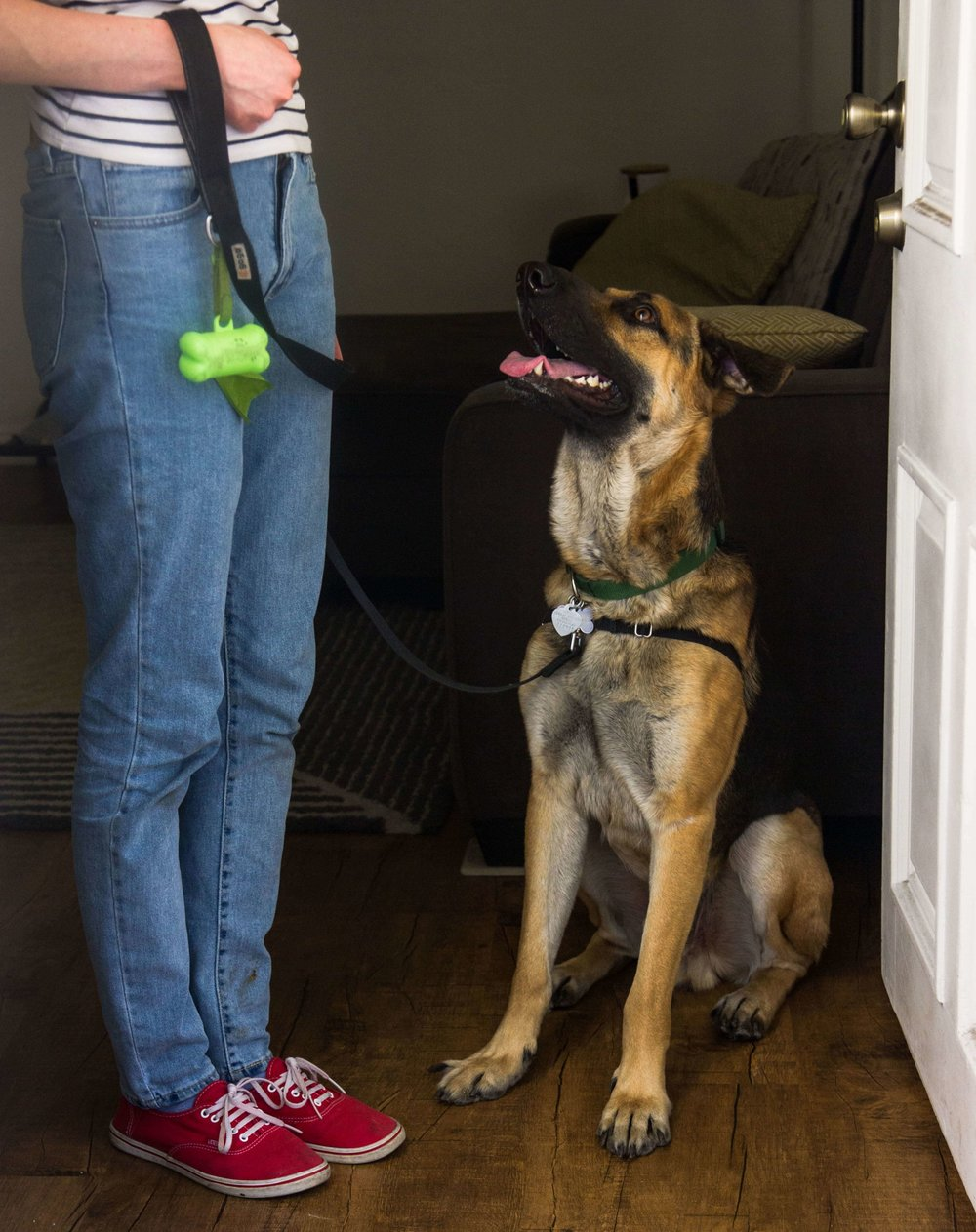 A shepherd mix learning how to sit before taking a walk with Dog Savvy Los Angeles, a private dog and puppy training company in Los Angeles.
