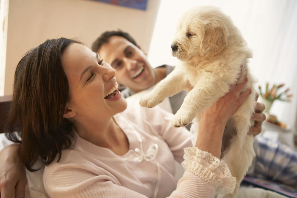 How to prevent separation anxiety in puppies.